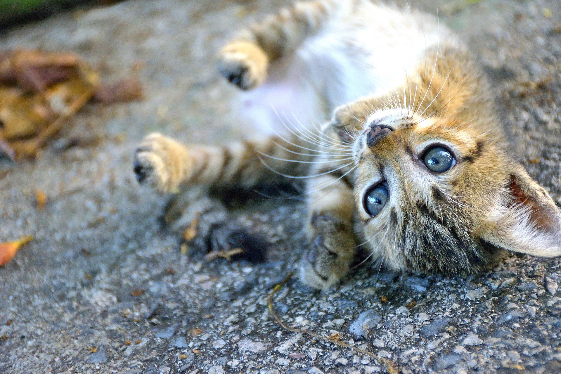 un gato cachorro en la calle