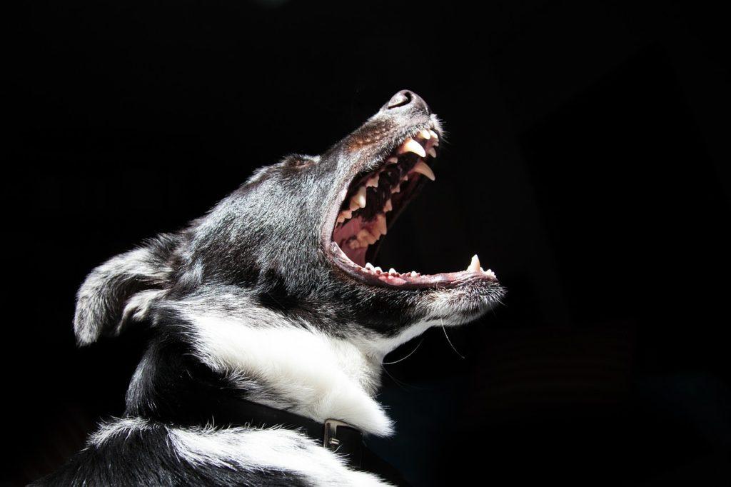perro con la boca abierta, dientes que pueden causar graves daños