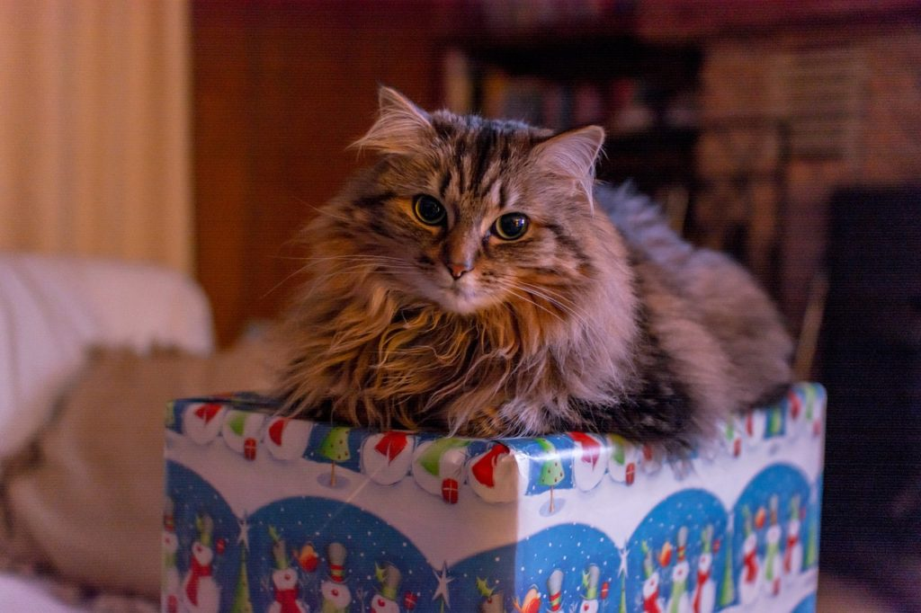 un animal no es buen regalo