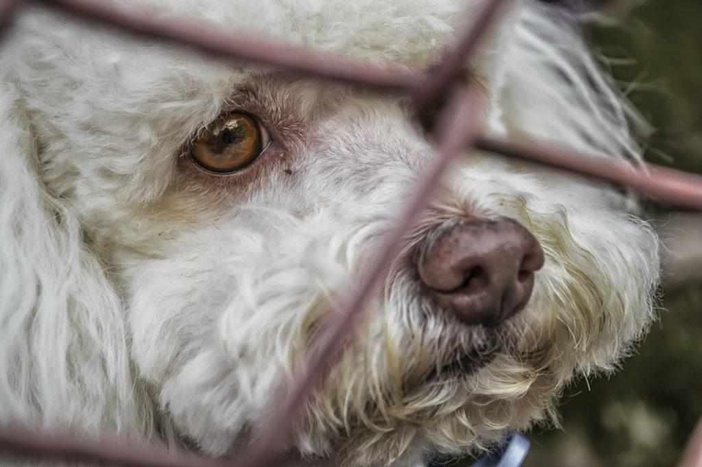 perro abandonado, no tuvo la culpa